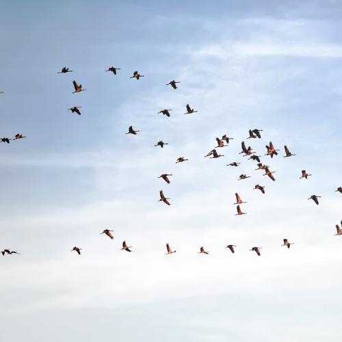 Führungskultur: Vogelschwarm